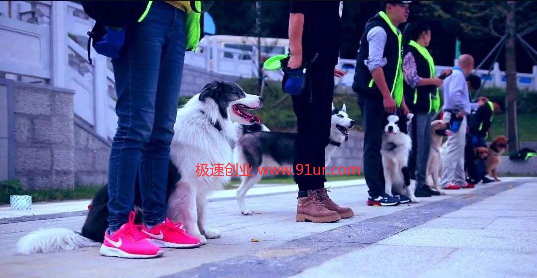 免费宠物训练教程#宠物狗训练教程#训犬师初级、中级、高级视频教程