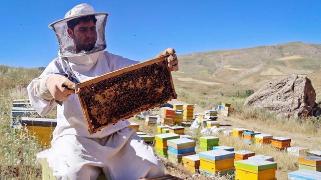 伊朗是世界第四大蜂蜜生产国